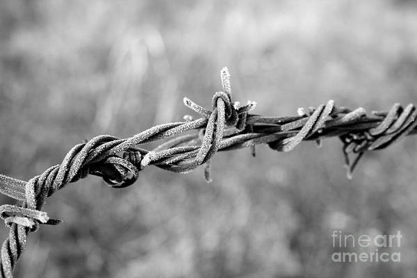 Barb Wire Art Print featuring the photograph Frosty Barb Wire by Robyn Pervin