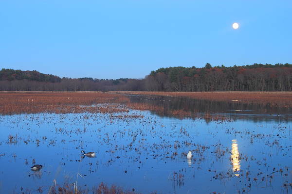 Great Meadows National Wildlife Refuge Art Print featuring the photograph Full Moon At Great Meadows National Wildlife Refuge by John Burk
