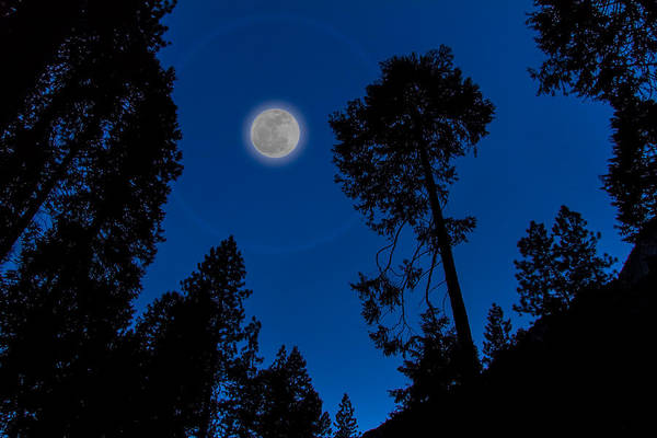 Art Art Print featuring the photograph Full Moon In Yosemite by Ron Pate