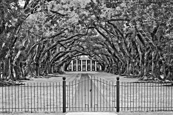 Oak Alley Plantation Art Print featuring the photograph Gateway To The Old South Bw by Steve Harrington