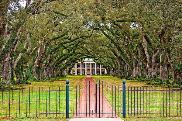 Oak Alley Plantation Art Print featuring the photograph Gateway To The Old South by Steve Harrington