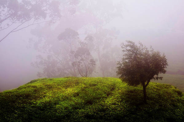 Sri Lanka Art Print featuring the photograph Ghost Tree In The Haunted Forest. Nuwara Eliya. Sri Lanka by Jenny Rainbow