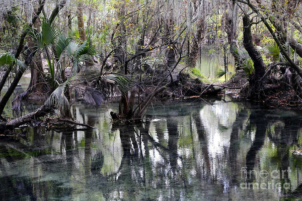 Fresh Water Springs Art Print featuring the photograph Going Back In Time by Carol Groenen
