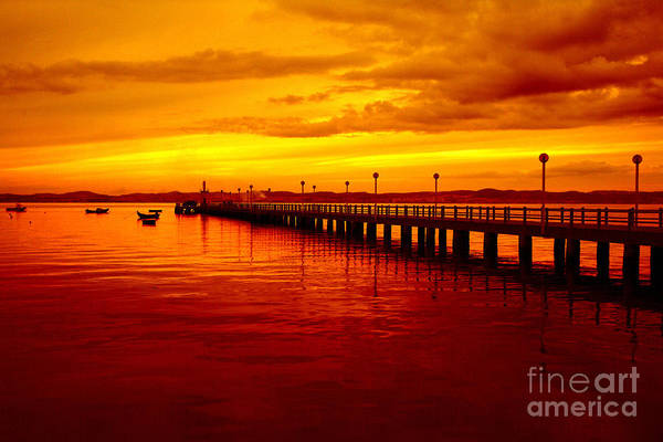 Golden Nature Print featuring the photograph Golden Nature by Boon Mee