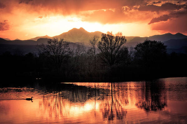 Sunsets Art Print featuring the photograph Goose On Golden Ponds 1 by James BO Insogna
