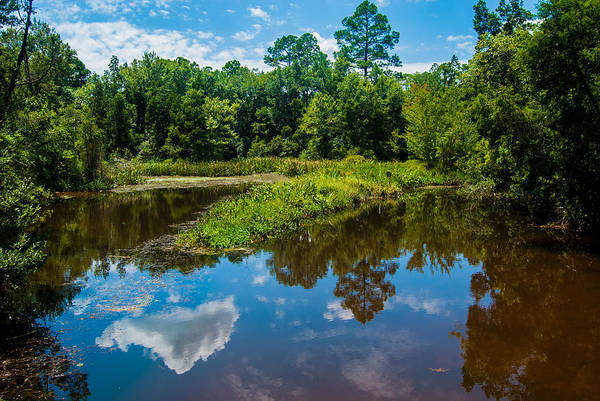Uwf Art Print featuring the photograph Great Reflections by Jon Cody
