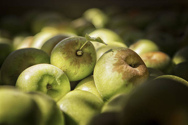 Apples Art Print featuring the photograph Green Jewels by Caitlyn Grasso