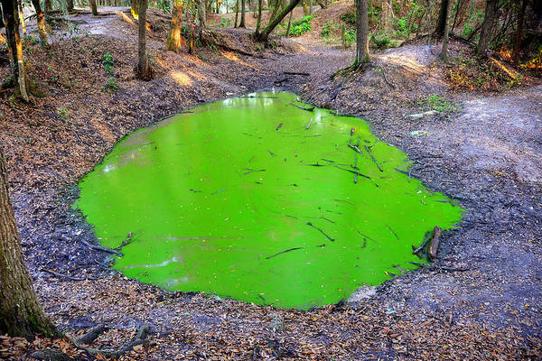Algae Art Print featuring the photograph Green Spill by David Lee Thompson