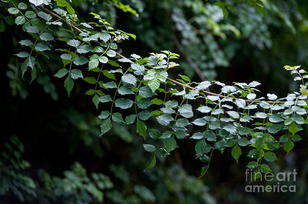 Green Art Print featuring the photograph Greens by Dan Holm