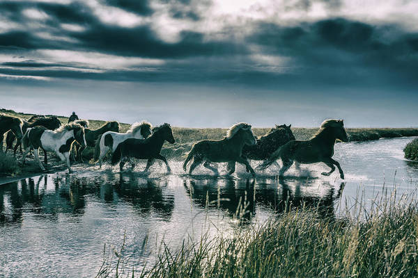 Horse Art Print featuring the photograph Group Of Horses Crossing A River by Arctic-images