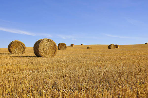 Hay Art Print featuring the photograph Harvest Season by Yves Gagnon