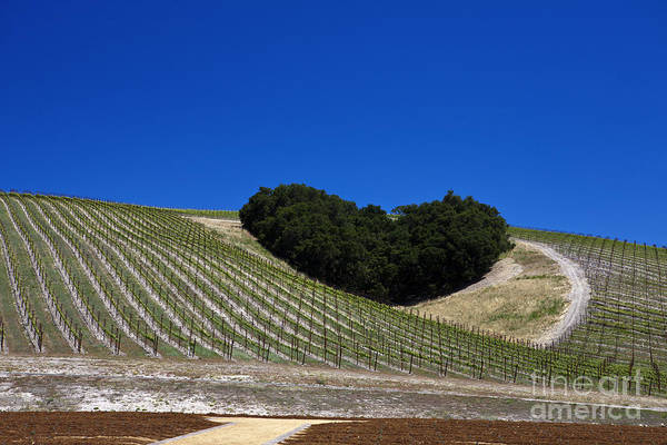 Travel Art Print featuring the photograph Heart Hill Paso Robles by Jason O Watson