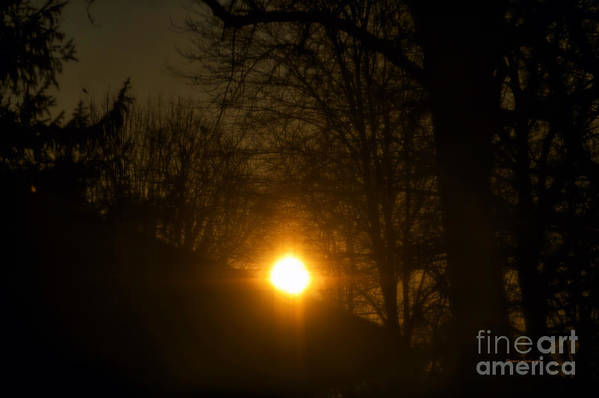 Sun Art Print featuring the photograph Hello Springtime Sunrise by Thomas Woolworth