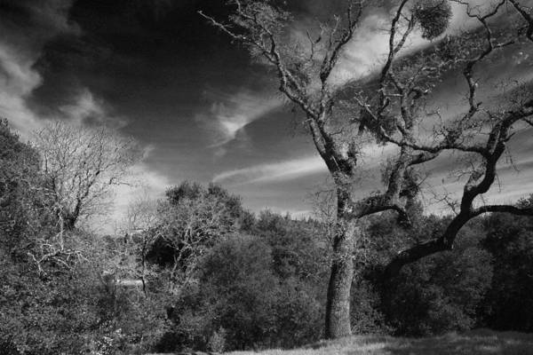 Lafayette Reservoir Recreation Area Art Print featuring the photograph Here As I Stand by Laurie Search