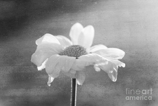 Flower Art Print featuring the photograph Highlighted by Aimelle