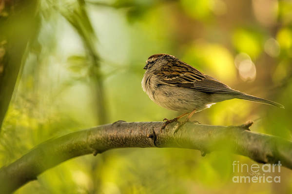 Sparrow Art Print featuring the photograph His Eye Is On The Sparrow by Lois Bryan