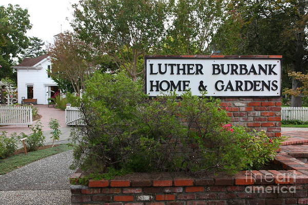 Historic Luther Burbank Home And Gardens Santa Rosa California 5d25891 Art Print By Wingsdomain