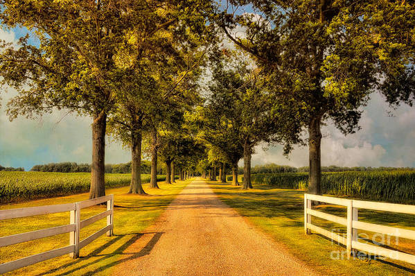 Road Art Print featuring the photograph Home In Time For Supper by Lois Bryan