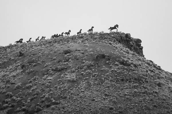 Montana Art Print featuring the photograph Horizon Horse by Paul Bartoszek