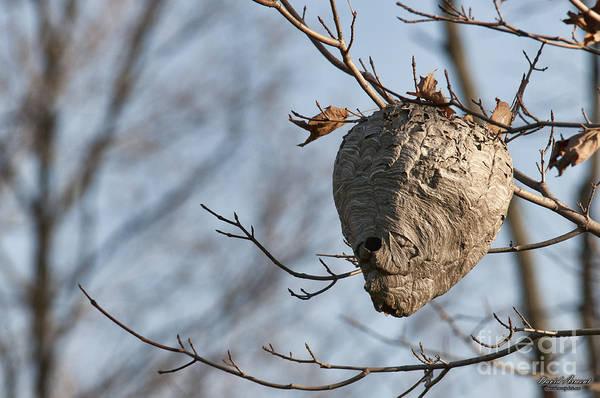 Hornets Nest Art Print featuring the photograph Hornets Nest by David Arment