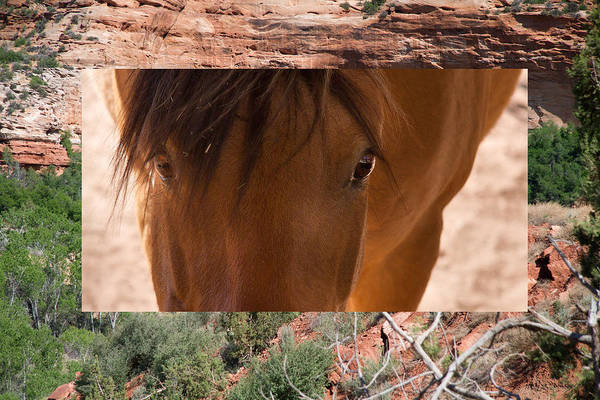 Horse Art Print featuring the photograph Horse And Canyon by Natalie Rotman Cote