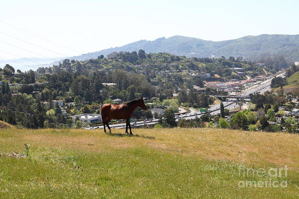 Marin Art Print featuring the photograph Horse Hill Mill Valley California 5d22662 by Wingsdomain Art and Photography