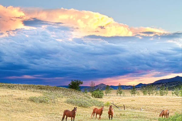 Storm Art Print featuring the photograph Horses On The Storm 2 by James BO Insogna