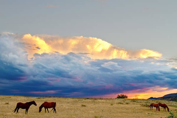 Horses Art Print featuring the photograph Horses On The Storm by James BO Insogna