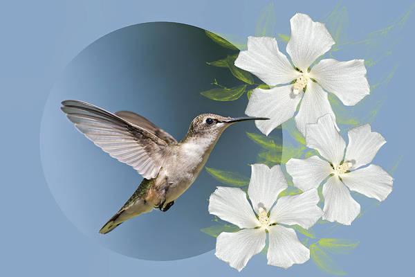 Hummingbird Art Print featuring the photograph Hummingbird Heaven by Bonnie Barry