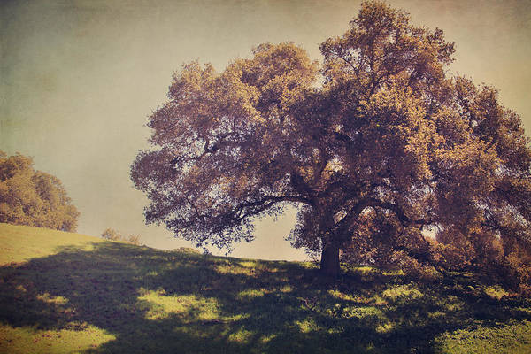Dry Creek Hills Regional Park Art Print featuring the photograph I Wish You Had Meant It by Laurie Search