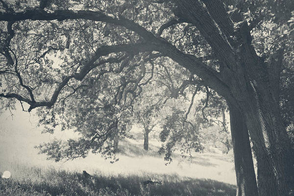 Mt. Diablo State Park Art Print featuring the photograph I Would Wrap My Arms Around You by Laurie Search