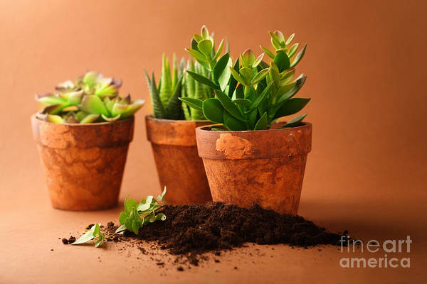Indoor Plant Art Print featuring the photograph Indoor Plant by Boon Mee