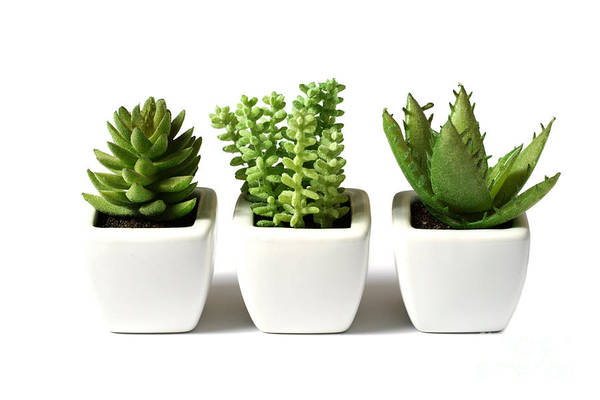 Indoor Plants Art Print featuring the photograph Indoor Plants by Boon Mee