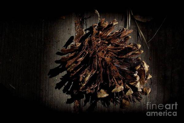 Pine Art Print featuring the photograph Inner Pine Cone by Charles Majewski