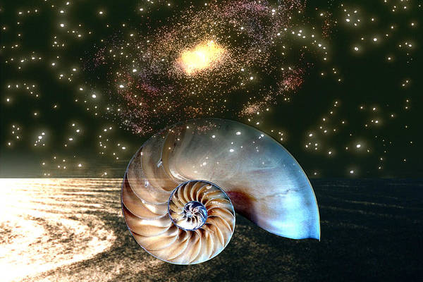 Shell Art Print featuring the digital art Inner Space Outer Space by Lisa Yount