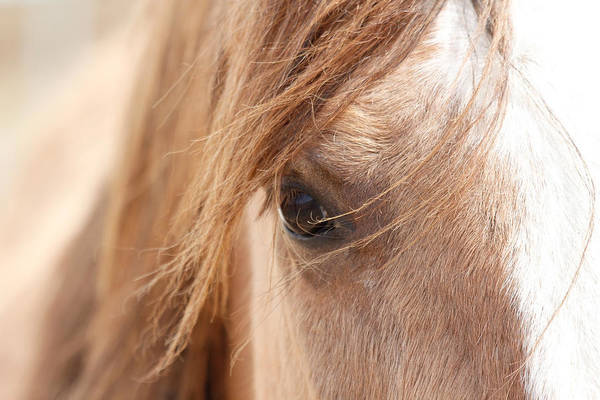 Horses Art Print featuring the photograph Into My Soul by Athena Mckinzie