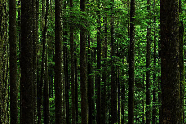 Nature Art Print featuring the photograph Into The Forest Darkly by Connie Handscomb