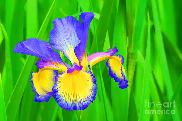 Flower Art Print featuring the photograph Iris Blossom by Teresa Zieba