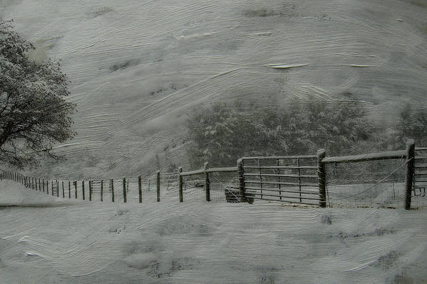 Snow Art Print featuring the photograph January Storm by Kathy Jennings