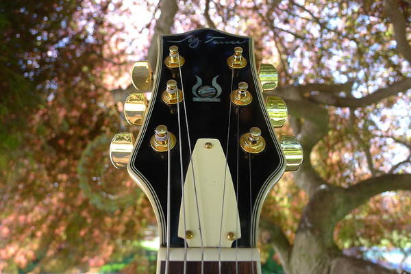 Jay Art Print featuring the photograph Jay Turser Head Stock by Richard Reeve