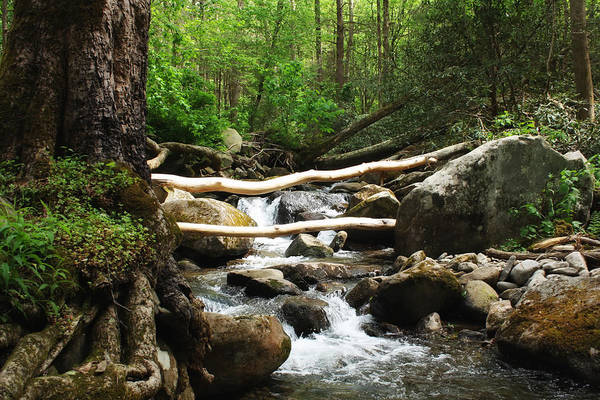 Gatlinburg Art Print featuring the photograph Just Outside Of Gatlinburg by Mountain Dreams