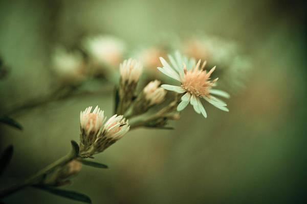 Flower Art Print featuring the photograph Kiss by Shane Holsclaw