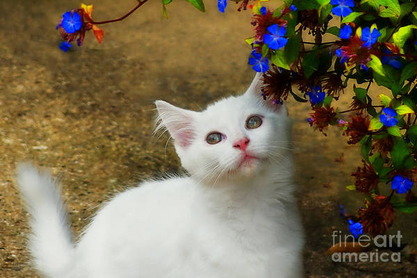 Cat Art Print featuring the photograph Kitten With Blue Flowers by Susie Peek
