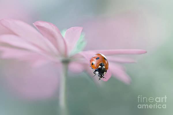 Ladybird Art Print featuring the photograph Lady In Pink by Jacky Parker