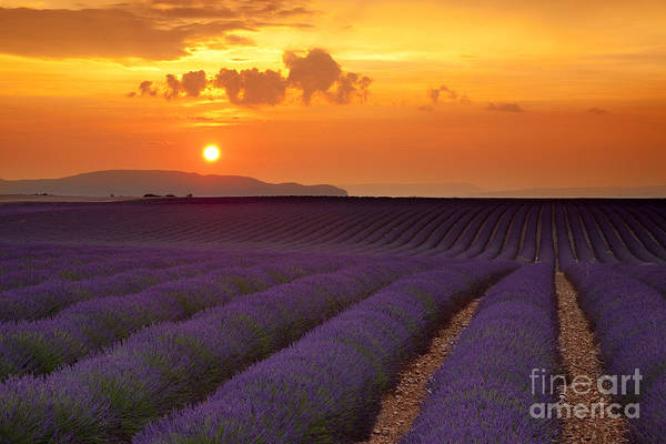 Lavender Art Print featuring the photograph Lavender Sunset by Brian Jannsen