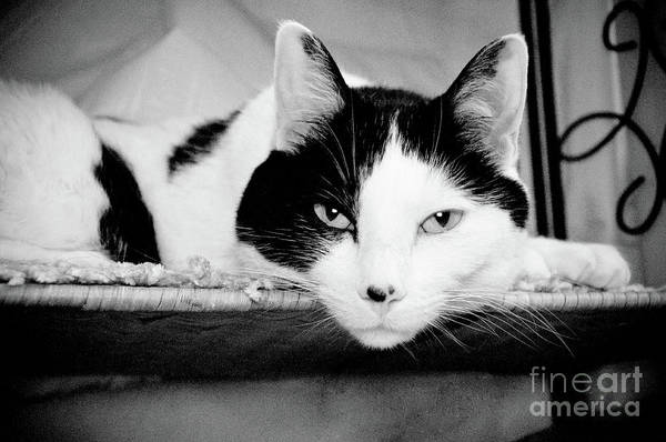 Andee Design Cat Art Print featuring the photograph Le Cat by Andee Design