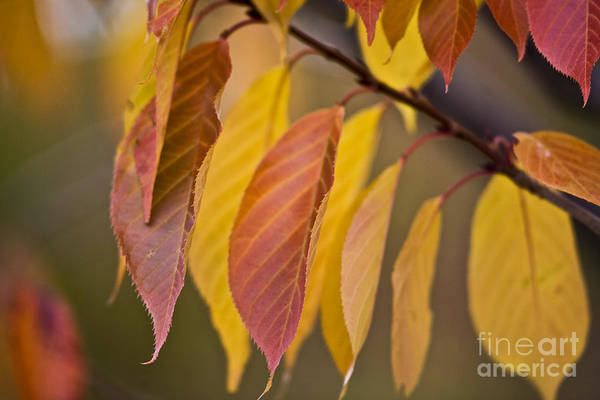 Heiko Art Print featuring the photograph Leaves In Fall by Heiko Koehrer-Wagner