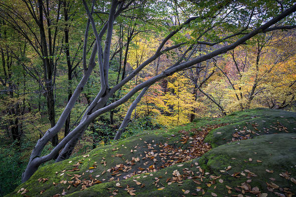 Cuyahoga Art Print featuring the photograph Ledges Overlook Trail 6 by Denny Beck