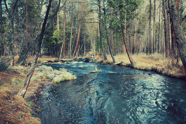 Hat Creek Art Print featuring the photograph Let It All Go by Laurie Search