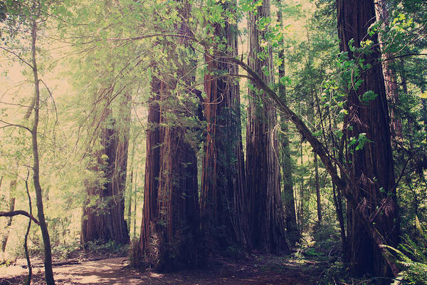 Avenue Of The Giants Art Print featuring the photograph Let Me Be The One by Laurie Search